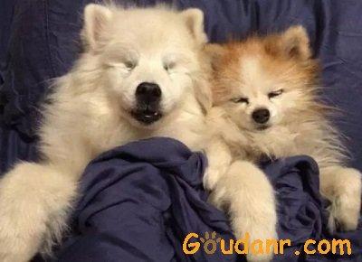 两只狗狗一起入眠